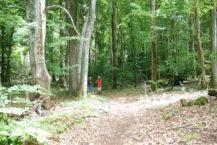 forêt de buis